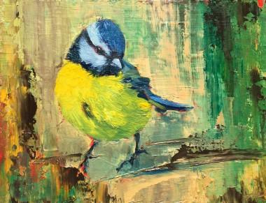 birds,portrait,