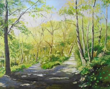 trees, sunlight, park, walks, affordable art, Enbrook Park, Kent, peaceful.
