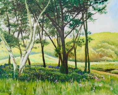 A Shady Copse in Sene Valley