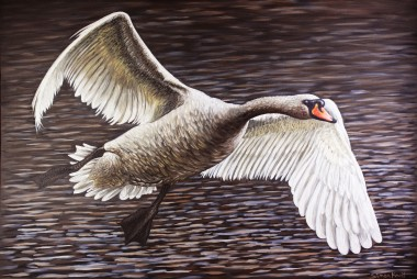 Swan Gliding * Main picture