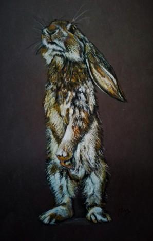 Frank - Lop-eared Bunny