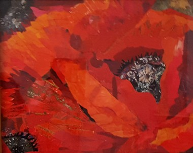 Flowers red poppies remembrance natures wildlife