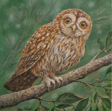 Owl full view