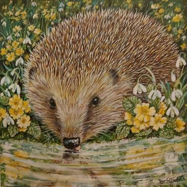 Hedgehog  view full.