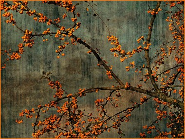 Crab apple branches, photo