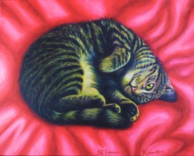 Cat Curl - My pet cat Gigi