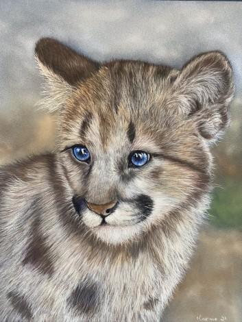 Pastel portrait of cougar cub
