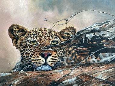 Tavangumi Leopard