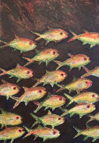 Tropical Fish in Australia