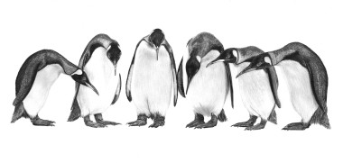 Penguin Conference