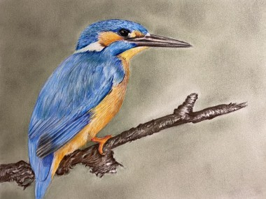 Pastel painting of Kingfisher