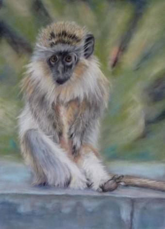Baby Barbados Monkey