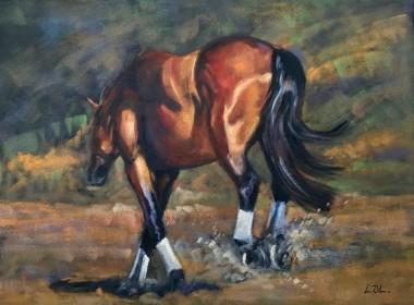 Bay horse full