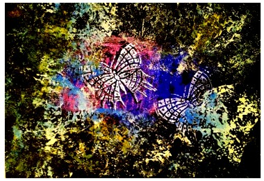 Butterfly Exotica 1