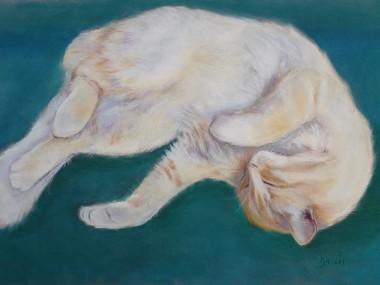 Sleeping cat pastel drawing cream ginger fur Dawn Rodger