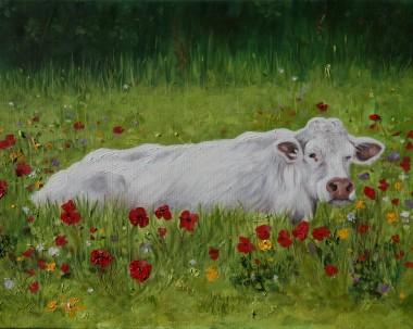 Irish Cow in Poppies