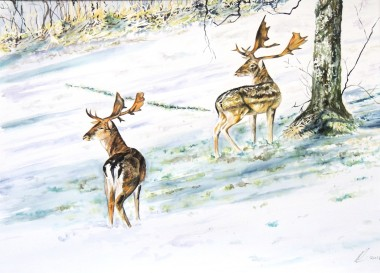 Fallow deer under a tree in the snow