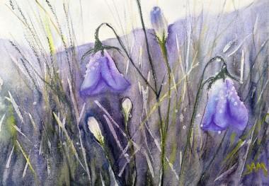 flowers harebells grasses