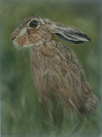 Resting hare. Pastels.