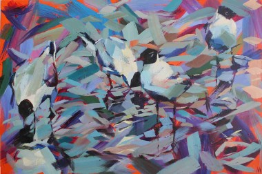 Hooded Gulls Colour