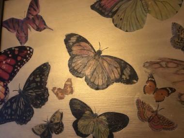Butterfly Heaven