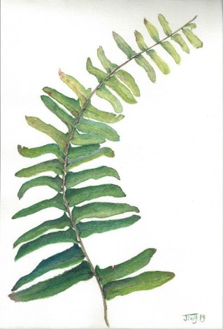 fern, foliage, leaves, plants, botanical, botanical garden, evergreen