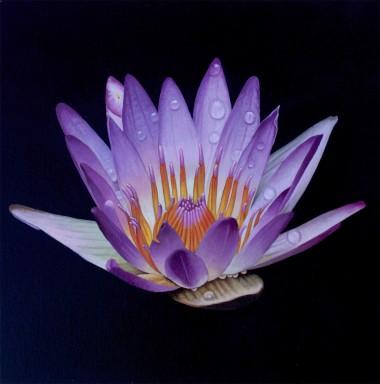 Lotus Crown