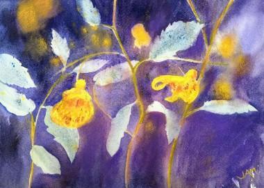 flowers orange balsam