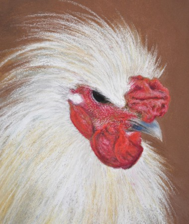 portrait of a silkie rooster, pastel painting