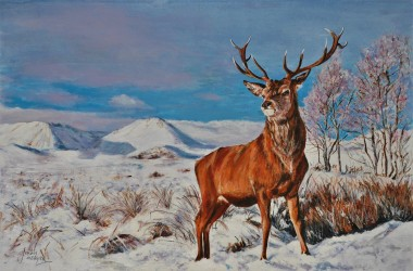 Hunted stag in Scottish Mountains
