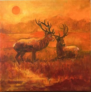 Deer Richmond Park (orange)