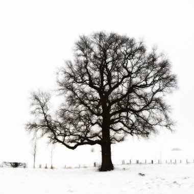 A winter tree in the snow, photo