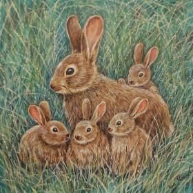 Rabbits full view