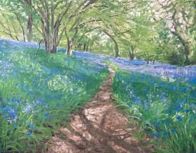 Bluebells, path through the Bluebells, Bluebell woods