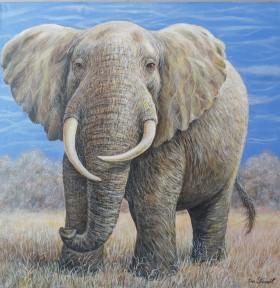 Elephant full front veiw