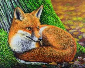 Wyre Forest Fox Autumn Wildlife