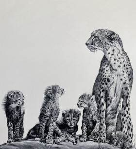 Black & white cheetahs