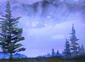 Highland Moor Scotland - Spruce trees