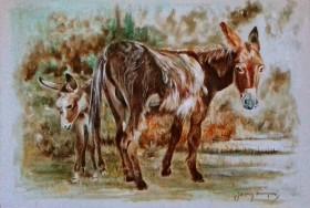Donkeys in shady spot