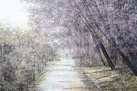 Cherry Blossom Trees In Evening Light