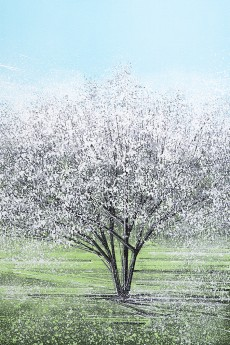 White Tree Blossom In Bright Light