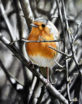 Cheeky chappy ( robin in hedge)