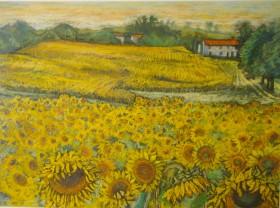 main sunflowers