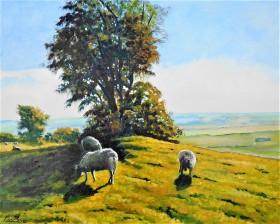 summer sheep sunlight & shadows peaceful Kent walks