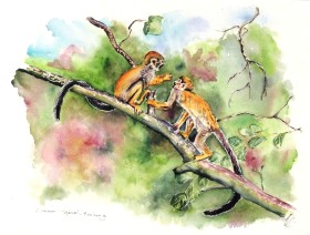 Common squirrel monkeys of the New World