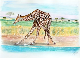 Watercolour of giraffe in Namibia,stooping to drink water.