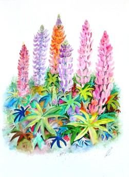 Garden Lupins,summer flowers