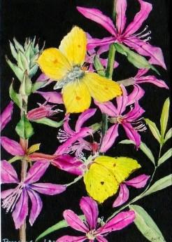 Brimstone Butterflies. Botanical Watercolour