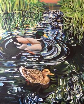 Ducks making ripples