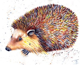 Splashy Hedgehog